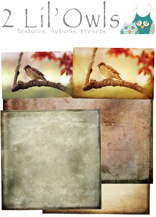 2 Lil Owls Textures and Papers Collection
