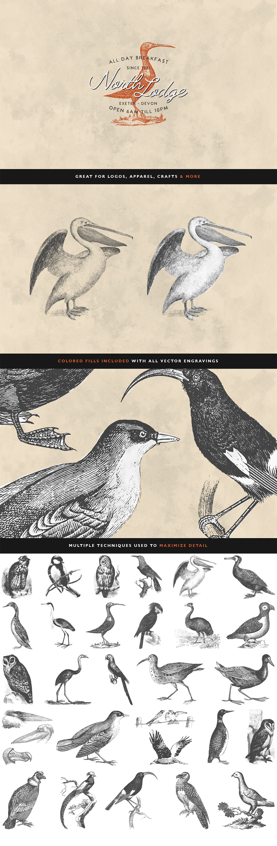 30 Bird Illustrations Volume 2