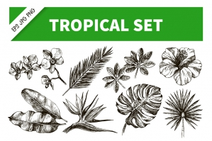 Hand-drawn Tropical Plants Vector Set