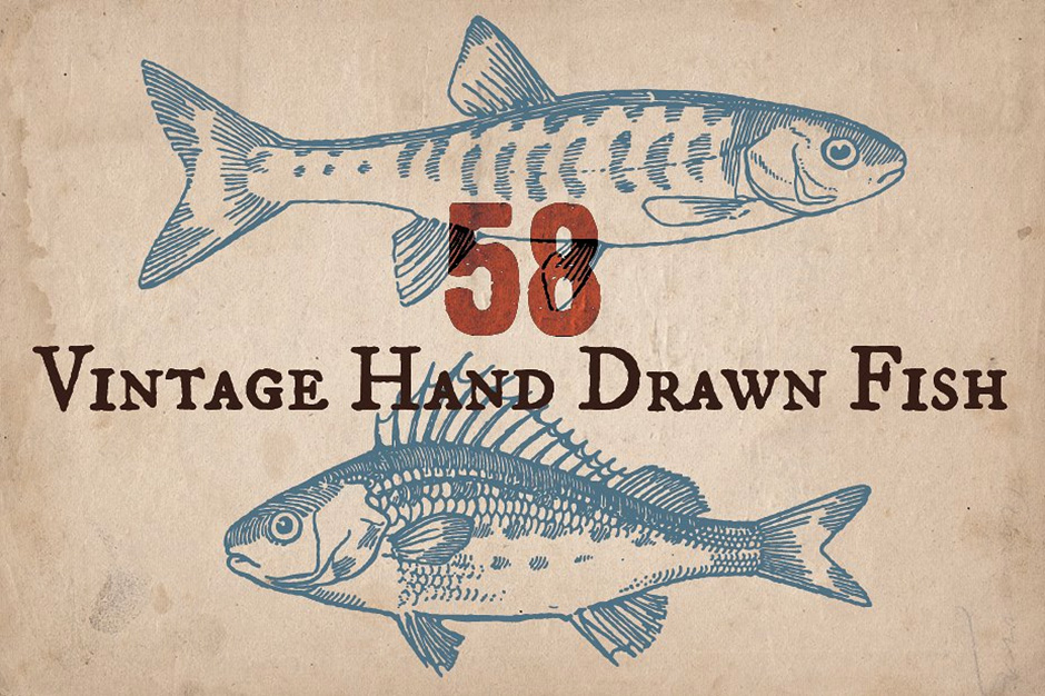 58 Vintage Hand-drawn Fish