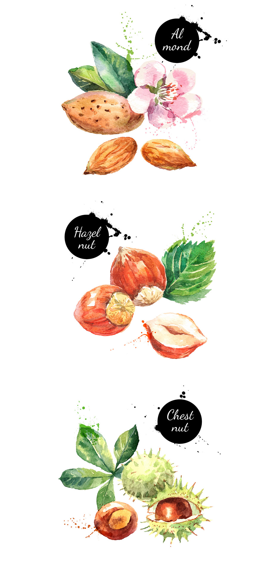 Watercolor Nuts Vector Set