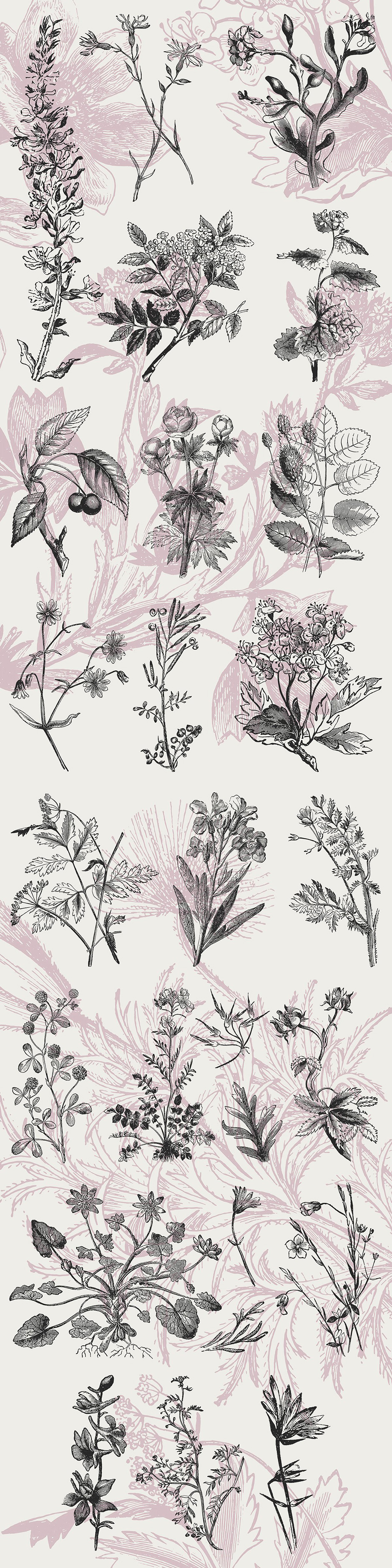 40 Plant & Flower Illustrations No. 4