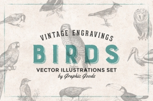 97 Vintage Birds Engravings