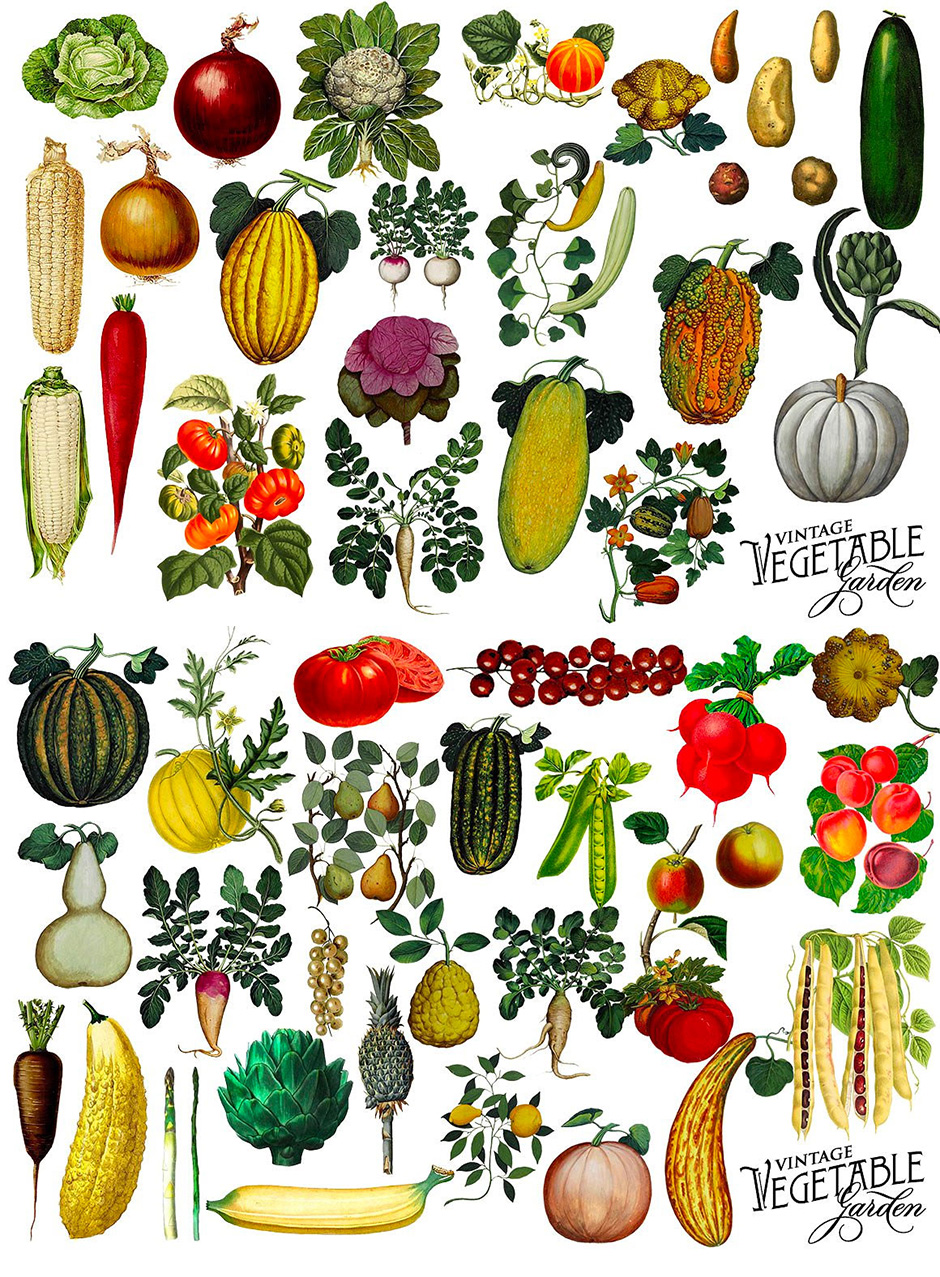 Vintage Vegetable & Botanical Graphics