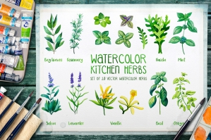 Watercolor Herbs