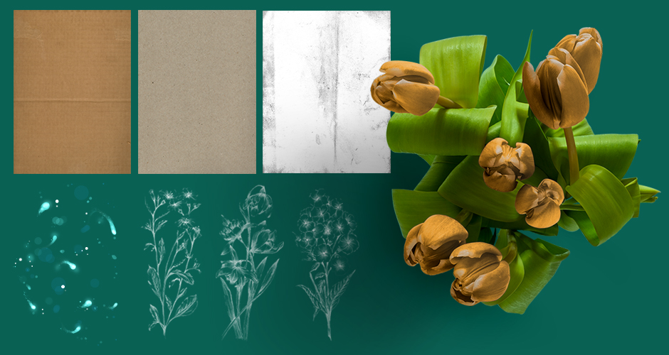 Floral Illustrations, Flower Stock Photo and High Resolution Textures