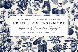 Fruit & Flower Illustrations and more!
