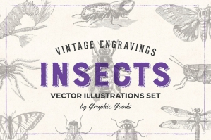 Insects - Vintage Illustrations