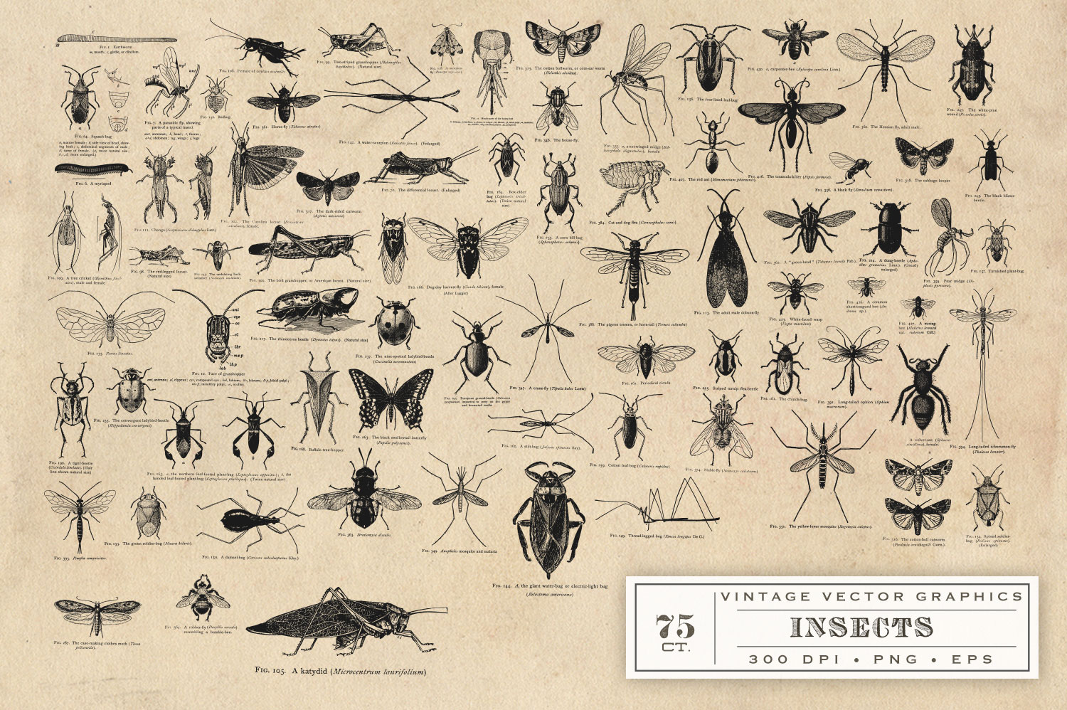 Insect Vector Graphics