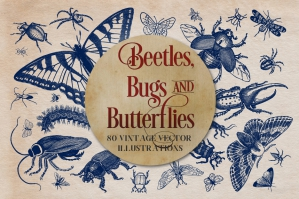 Vintage Insects and Butterflies