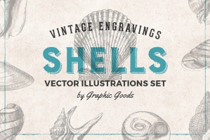 Shells Vintage Engravings Set