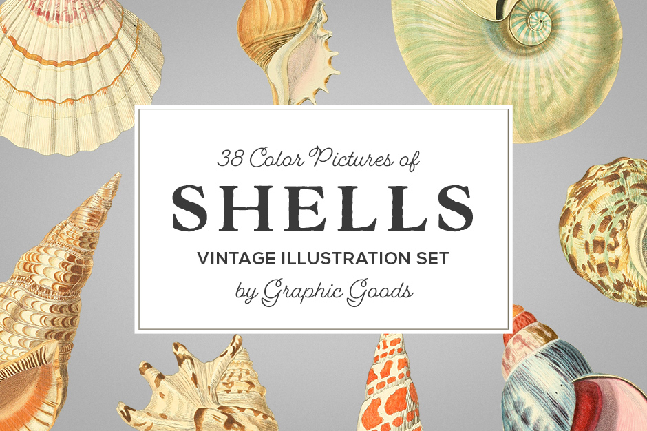 vintage shell illustrations