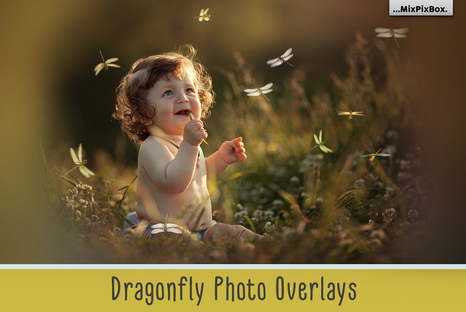 Dragonfly Overlays