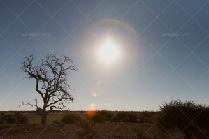 Sun Over Kalahari Desert Creates Lens Flare
