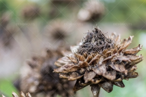 A Close Up Of A Seed Head On A Plant