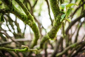 A Close Up Of New Growth On A Moss Covered Tree