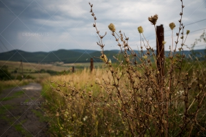A View Down A Farm Track In The Hungarian Countryside