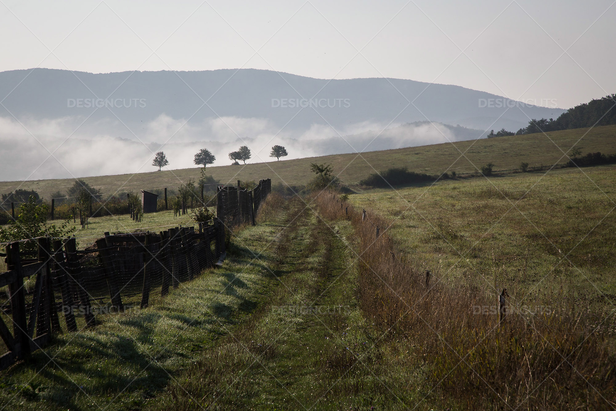 A View Down A Farm Track To Four Trees In The Morning Mist