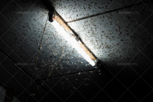 Moths Gather Around A Light On The Ceiling Of A Room