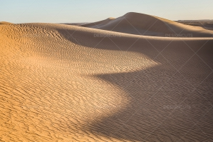 Sand Dunes In The Sahara Desert No. 10
