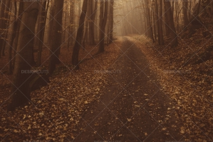 Forest Path With Fallen Leaves Leading Through Orange Autumn Forest