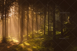 Golden Light Of Rising Sun Shining Through Misty Forest