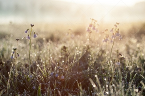 Meadow With Rising Sun In Background