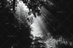 Road Through Forest With Rays Of Rising Sun In The Czech Republic