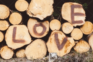 Sign Love On Trunks Of Felled Trees