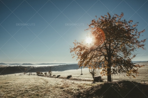 Tree By Road With Orange Leaves In Frosty Autumn Morning Under Clear Sky
