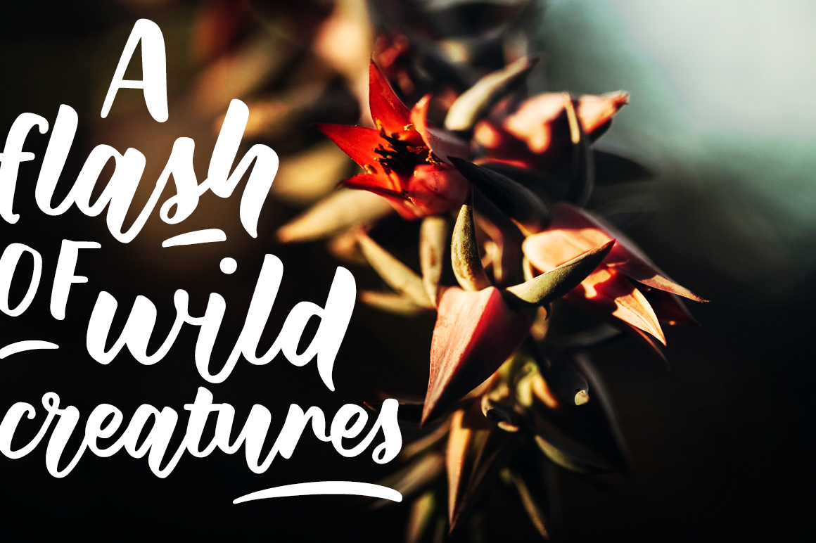 Wild Creatures Brush Font
