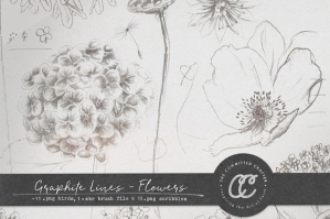 Graphite Lines – Flowers