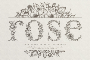 Rose - Hand Drawn Botanical Collection