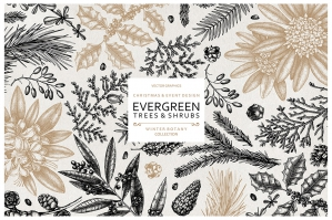 Evergreen Plants Christmas Design