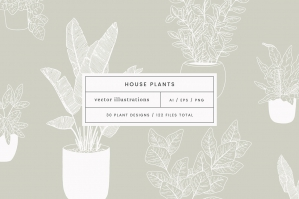 House Plants Vector Illustrations