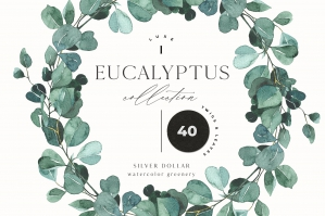 Eucalyptus Greenery, Foliage, Leaf Watercolor Set
