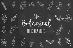 50+ Botanical Illustrations