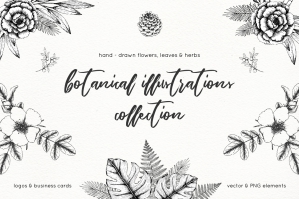 Hand-Drawn Botanical Illustrations Pack