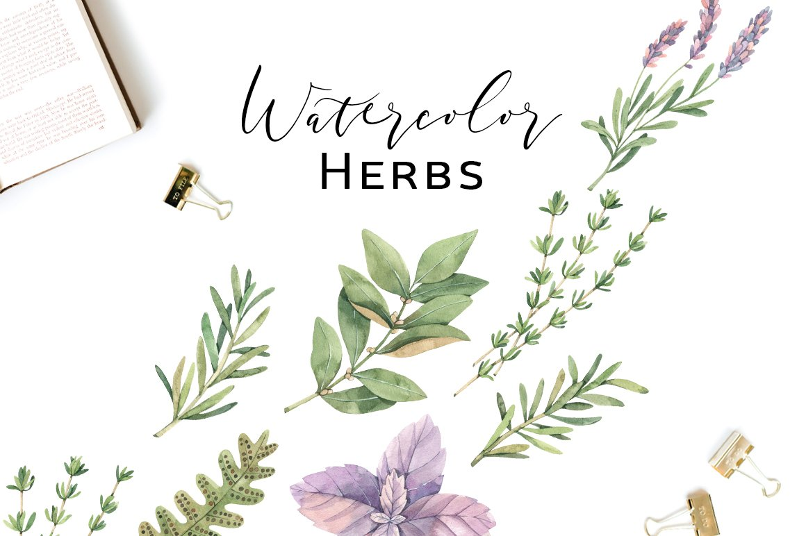 Watercolor Herbs Collection. Sage, Fern, Basil