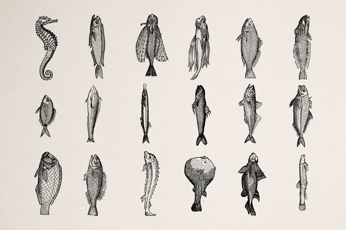 Fishes - Vol. 2