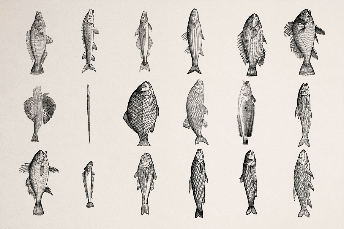Fishes - Vol. 3