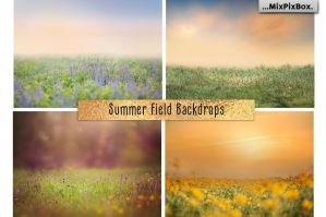 Summer Field Backdrops
