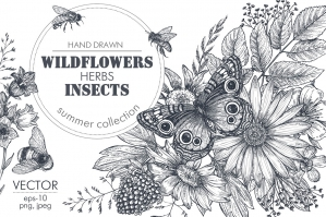 Insects and Wildflowers Vector Set