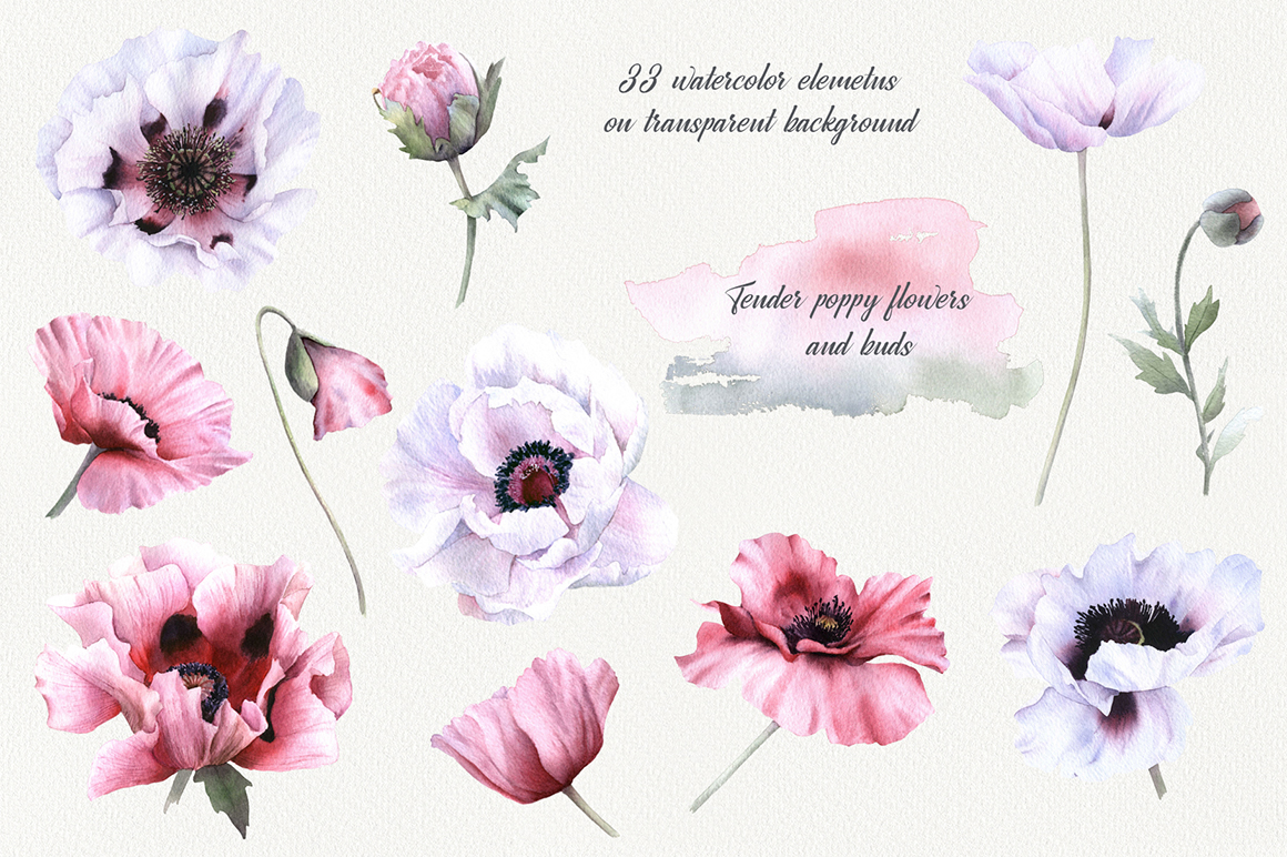 Romantic Poppies Watercolor Collection