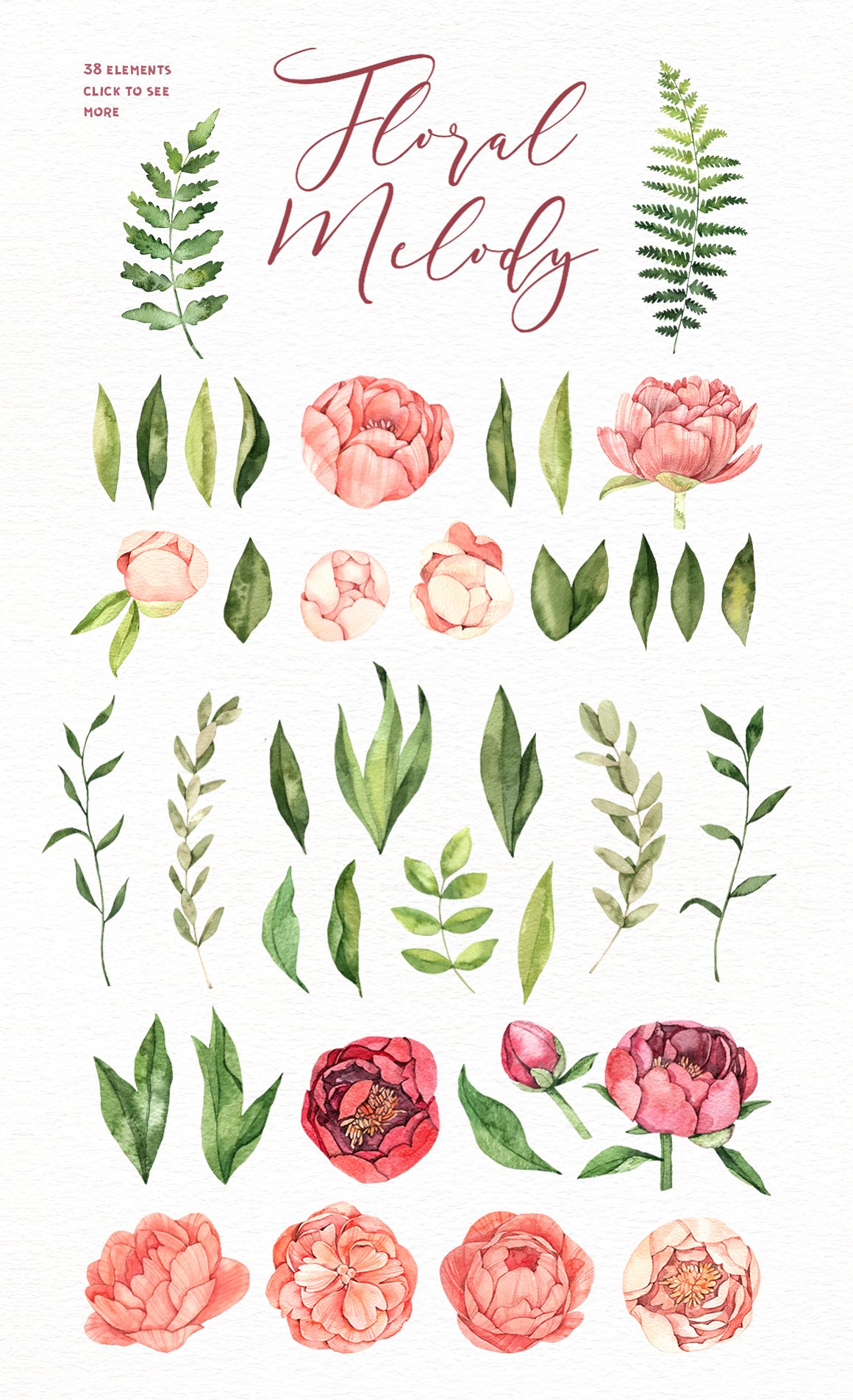 Watercolor Peony Flowers. Floral Set