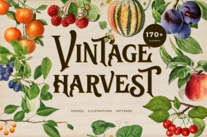 Vintage Harvest Fruits Collection