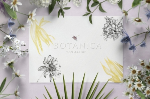 Botanica Illustrations Collection