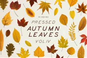 Pressed Autumn Leaves Vol. 4