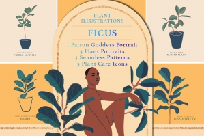 Ficus Plant Illustration Pack
