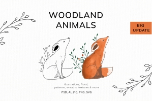 Woodland Animals Illustrations
